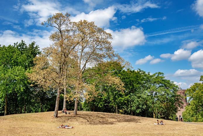 In het Kronenburgerpark staan enkele bomen er bij alsof het al herfst is.