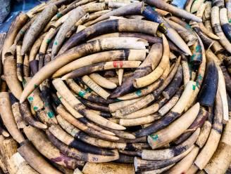 Meer dan 100 olifantenslagtanden in beslag genomen in Kameroen