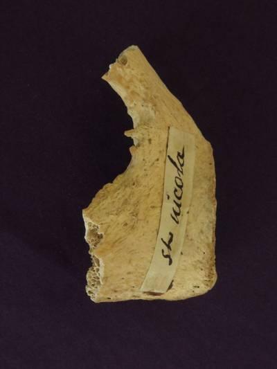 onderzoek--oude-botten-uit-itali%C3%AB-zijn-mogelijk-van-sinterklaas