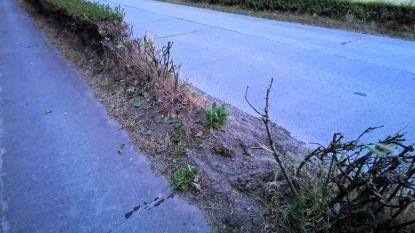 """Vandalen vernielen twintig jonge boompjes in Westrozebekestraat: """"Voor elke boom die weg is, gaan we twee nieuwe in de plaats zetten"""""""