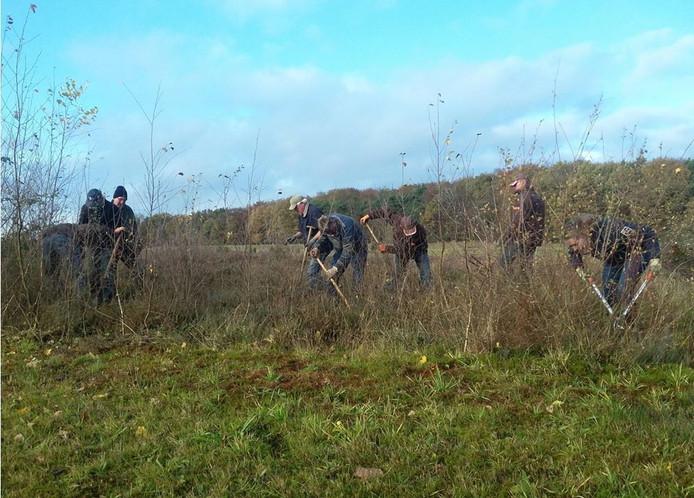 Met beugelzaag, steekschop en kniptang werden ongewenste bomen en struiken uit de heide verwijderd.