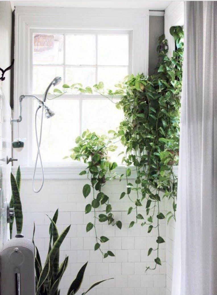 Interieurtrend: hang eens planten in je douche voor een tropisch ...