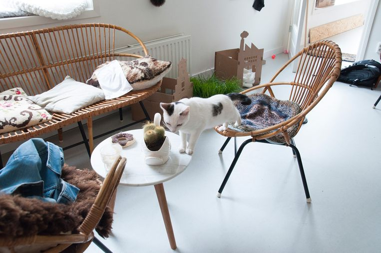Het kattencafé in Amsterdam. Beeld null