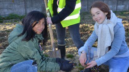 Scholieren planten vredesbos aan