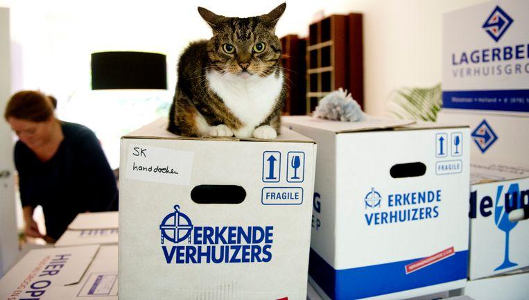 Een kat nestelt zich op een verhuisdoos in de woonkamer.  Beeld ANP