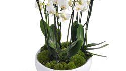 Je orchidee wil niet meer bloeien of krijgt gele bladeren: met deze tips houd je ze in topvorm