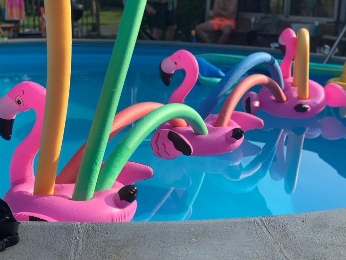 Dát is nog eens een tropisch zwembad. Met al die flamingo's lijkt het bijna Curacao, maar het is toch echt Stoutenburg.