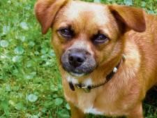Politie waarschuwt hondenbezitters voor rattengif