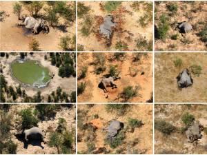 Le mystère de la mort de centaines d'éléphants s'épaissit au Botswana