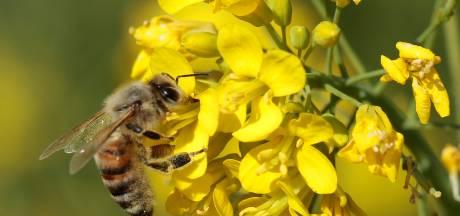 Bijengif mogelijk effectief middel voor behandeling borstkanker