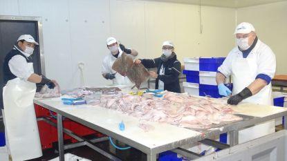 """Schipper, Vlaamse Visveiling, visverwerkend bedrijf én chefs schenken rode poon aan AZ Sint-Jan: """"300 zorgkundigen belonen met lekkere en gezonde maaltijd"""""""