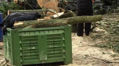 Kooi torenvalken verpletterd in Olmense Zoo