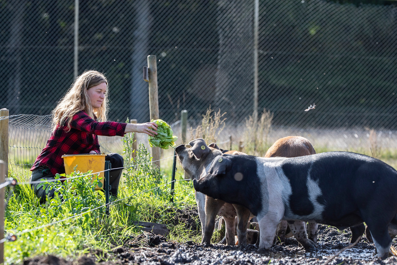 Ellen Willems bij de varkens die ze groot brengt.