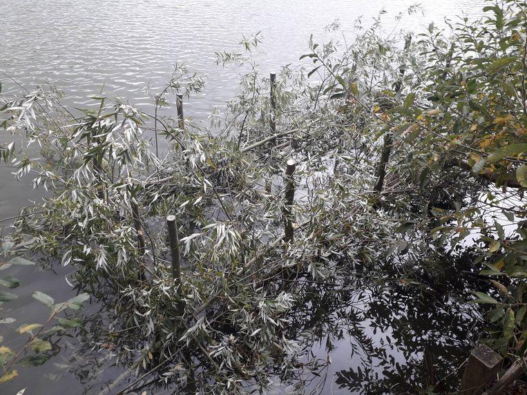 De zogenaamde 'visbossen' in de grote klaverbladvijver moeten kleinere vissen beschermen tegen hun grotere soortgenoten en roofvogels.