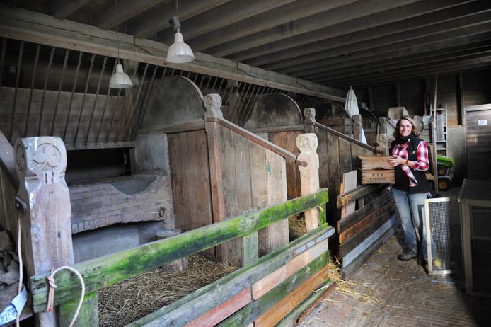 Sentine Kodde in de paardenstal.