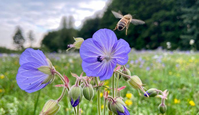 Houten wil meer en beter groen, ten gunste van de biodiversiteit die onder druk staat.