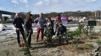Pro Voluit Respect! plant een klimaat- en fijnstofbos onder het viaduct van Vilvoorde