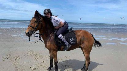Na maand nog steeds geen spoor van weggelopen pony, zelfs waarzegster komt zich moeien