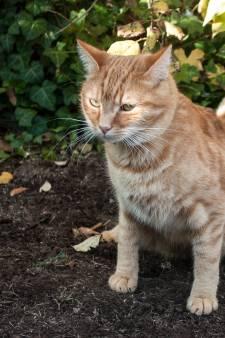 Kattenpoep in je tuin: moet je dat pikken of niet?