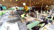 Wannes Van de Velde krijgt muzikaal eerbetoon in Bar Hasart