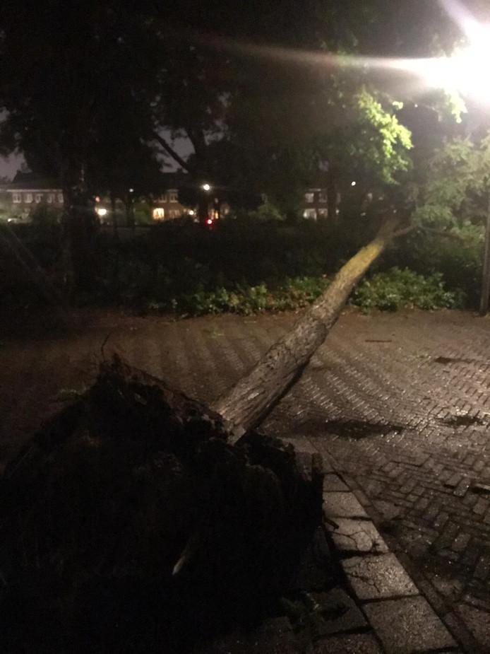 Boom omgewaaid op Kerstroosplein in Eindhoven