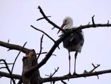 Je ziet haar denken: waar is mijn nest gebleven?