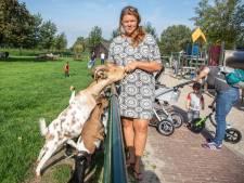 Voerverbod bij Zwolse kinderboerderij: 'Er lag zelfs slagroomgebak in de wei'