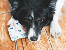 Hondenbezitters hoeven geen belasting te vrezen