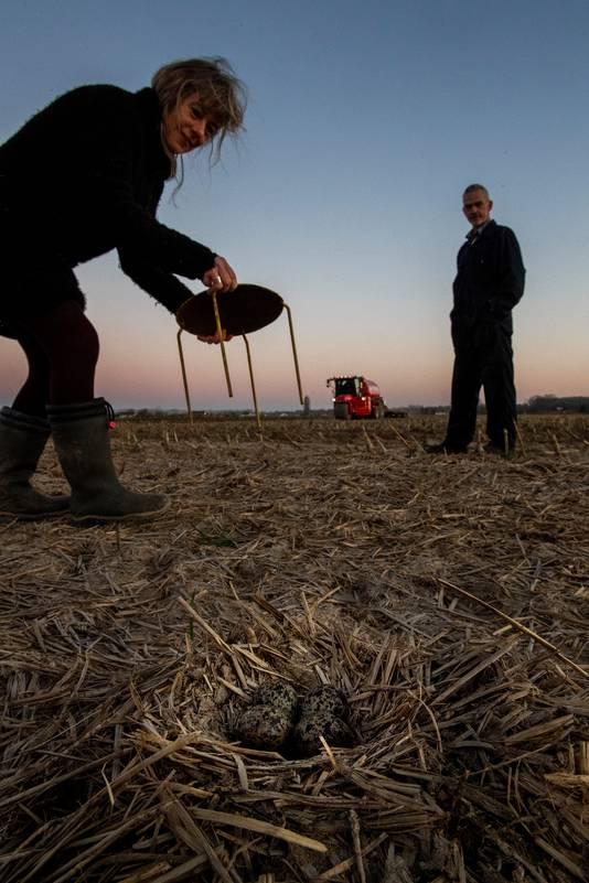 ingrid Remmers (links) pakt een gele kap waarmee ze een kievitsnest wil afdekken. Rechts landeigenaar Ko den Haan.