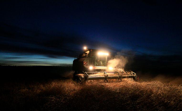 Een boer oogst tarwe bij het dorp Lakino, nabij de Siberische stad Krasnoyarsk. Beeld REUTERS