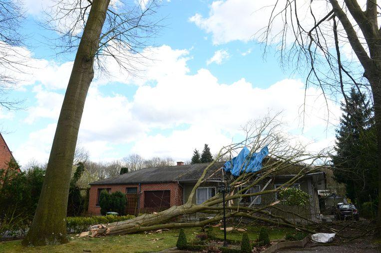 Een boom viel op een woning in de Bessenlaan in Rotselaar.