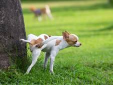 Kleine hondjes liegen over hun lengte