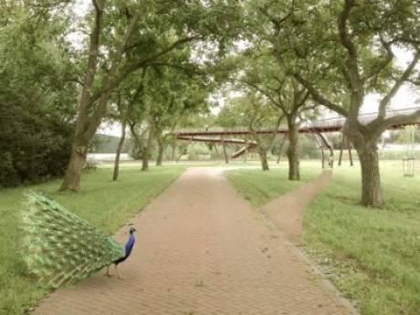 Nieuwe spoorbrug in Park Lingezegen wordt landmark
