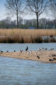 Trekvogels verhuizen naar de 'plasdras' om uit de buurt van de windmolens te blijven