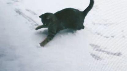 VIDEO. Kijk hoe kat sneeuwbal rolt