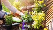 Onderzoek: dit zijn de favoriete tuinklussen van de Belg