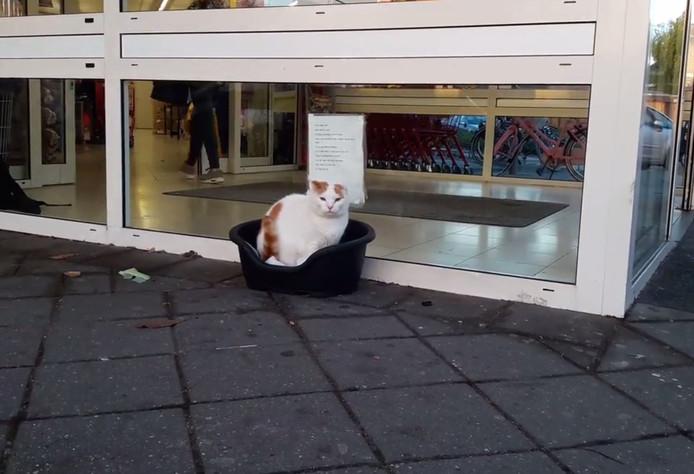 Bobkat op zijn vertrouwde plek.