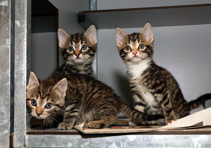 Kittens bij Stichting Zwerfkatten Rijnmond.