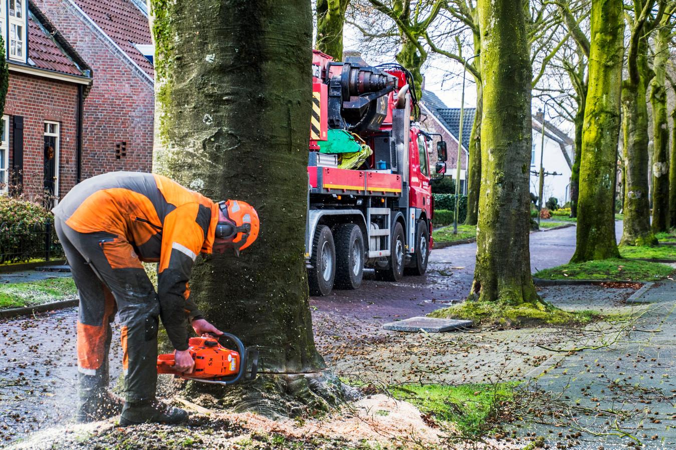 Hier was in 2017 wel een vergunning voor nodig: het kappen van 76 beukenbomen langs de Beukendreef.