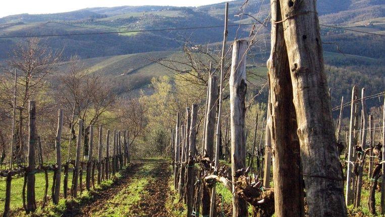 Het Toscaans heuvellandschap met wijngaarden. Beeld ANP