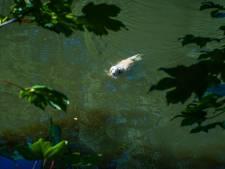 Omstander haalt recalcitrante hond uit water in Eindhoven