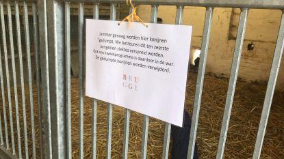 """""""Dump hier geen konijnen meer"""": kinderboerderij in Brugge houdt smeekbede én zet mogelijk wijkagent in"""
