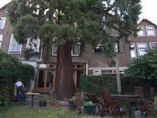 Buurt in verzet tegen kap 160 jaar oude sequoia aan het Kromhout