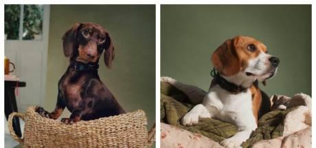 Zara Home lance une adorable collection d'accessoires pour animaux