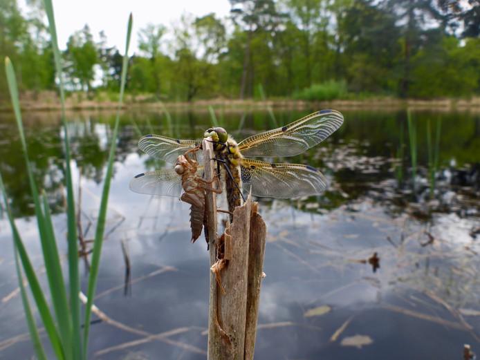 Behalve het natuurschoon van alle flora en fauna is ook de stilte een kwaliteit van Grenspark Kalmthoutse Heide. Om die waarde onder woorden te brengen, hebben 372 creatieve geesten een gedicht ingestuurd.