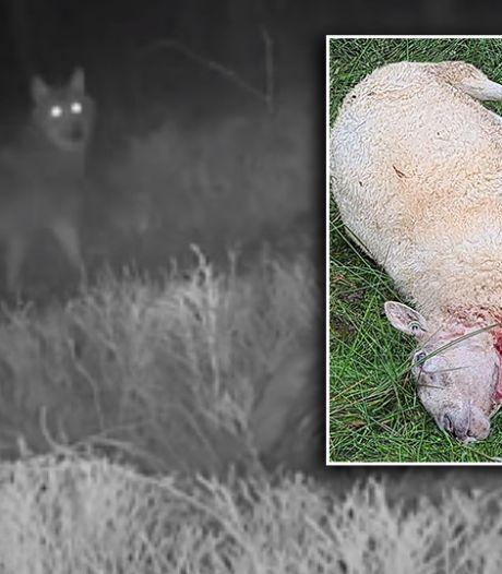 Van deze vijf dieren hadden we afgelopen jaar het meest te vrezen op de Veluwe