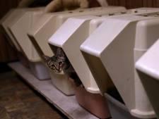 Telefoon roodgloeiend bij Arnhemse 'catnapper': 'Veel begrip voor mijn ergernis'
