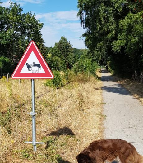 Zwarte schapen in Groesbeek