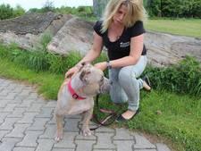 Dierenasiel Brammelo in Haaksbergen lapt gedumpte hond Kisha op