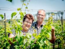 Gerrie wilde in Maas en Waal leven als een wijnboer in Frankrijk, 'maar je kunt er de kost niet mee verdienen'